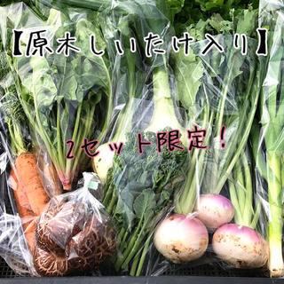 【限定!原木しいたけ入り】渥美半島から直送!旬彩野菜バスケット(野菜)