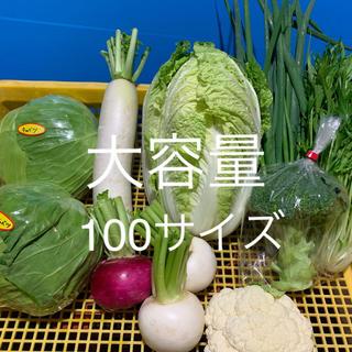 宮崎県産 野菜セット 100サイズ(野菜)