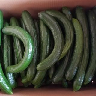 《S様専用》訳ありキュウリ5kg(野菜)