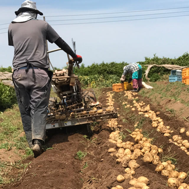 新じゃがいも 長崎県産 にしゆたか5kg  有機栽培 食品/飲料/酒の食品(野菜)の商品写真
