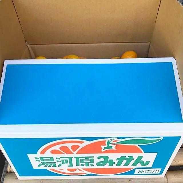 限定1箱★訳あり 神奈川県湯河原産 産直 中生みかんSサイズ以下10kg箱込み 食品/飲料/酒の食品(フルーツ)の商品写真