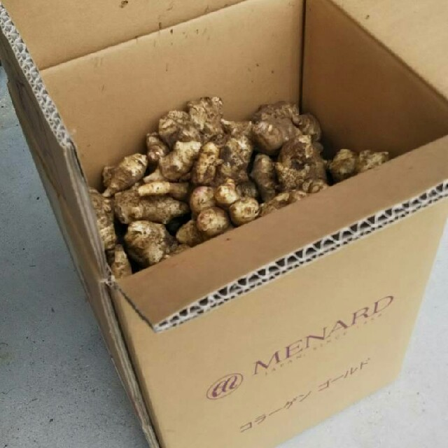 菊芋 5㎏ 送料込 食品/飲料/酒の食品(野菜)の商品写真
