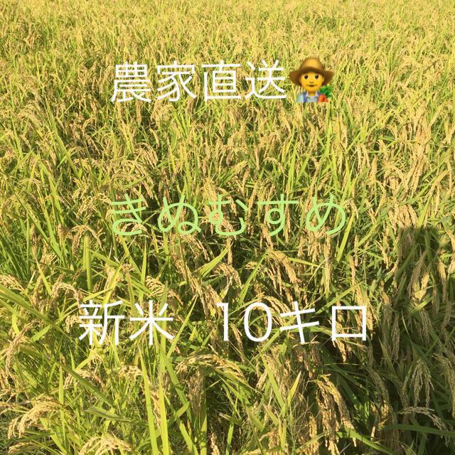 新米  きぬむすめ 食品/飲料/酒の食品(米/穀物)の商品写真