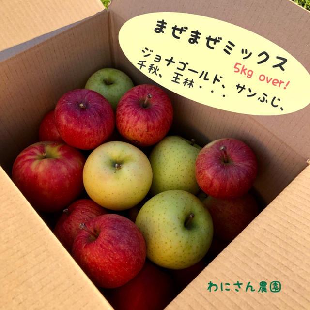 訳あり✴︎まぜまぜミックスりんご 5kg  over! 食品/飲料/酒の食品(フルーツ)の商品写真