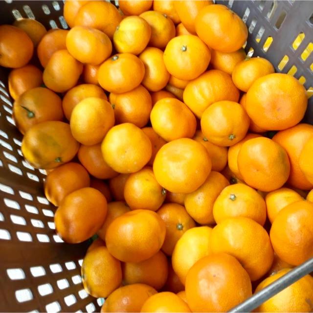トーマスゆう様専用 温州みかん 小玉 食品/飲料/酒の食品(フルーツ)の商品写真