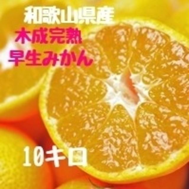 完熟早生みかん 10㎏ 和歌山県産 食品/飲料/酒の食品(フルーツ)の商品写真