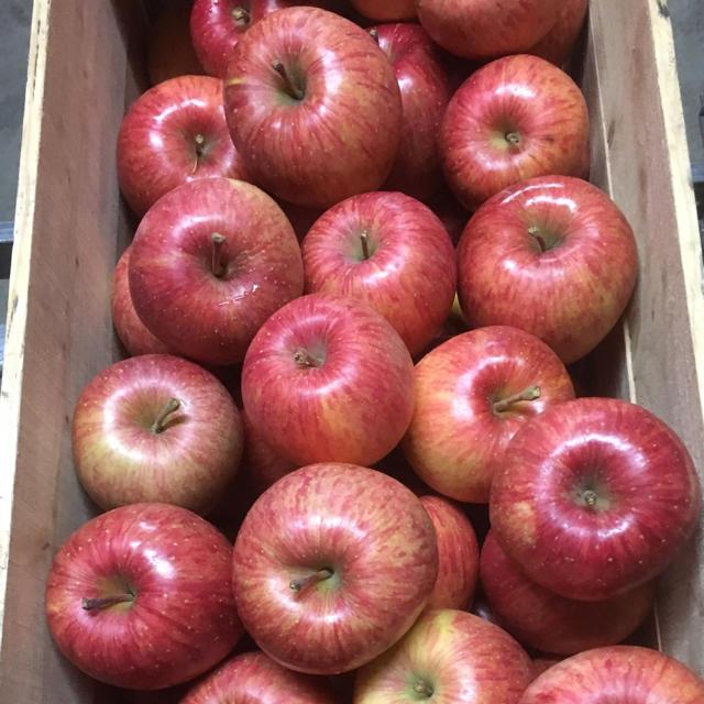 蜜入り自慢!青森県産りんご 葉とらずふじ 5キロ 食品/飲料/酒の食品(フルーツ)の商品写真