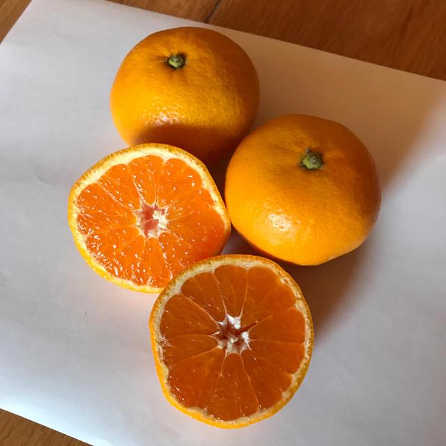 モンチ様専用 マルチ小粒みかん10kg 食品/飲料/酒の食品(フルーツ)の商品写真