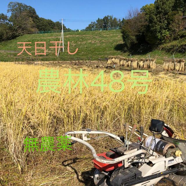 農林48号 精米 5Kg  平成30年産新米 天日干し 無農薬 食品/飲料/酒の食品(米/穀物)の商品写真