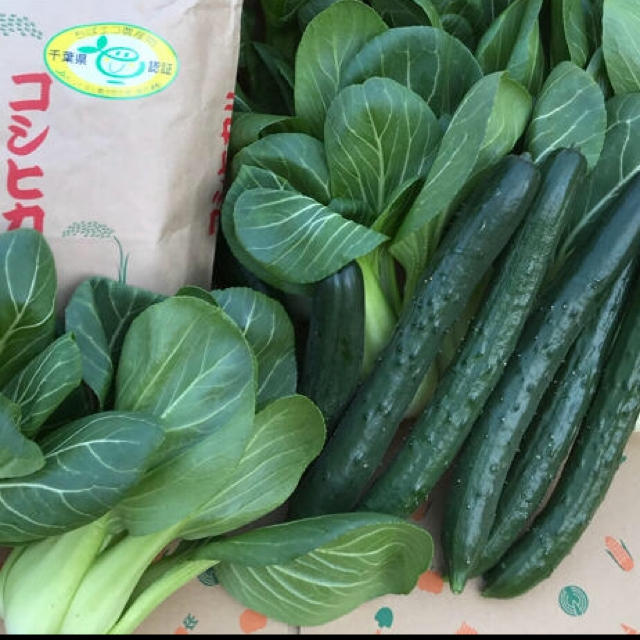 チンゲン菜、キュウリ、コシヒカリ 食品/飲料/酒の食品(野菜)の商品写真