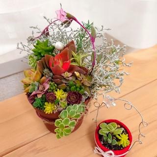 ◆クリスマス寄せ植え◆多肉寄せ植え 多肉アレンジ ミニ多肉&ワイヤーオブジェつき(その他)