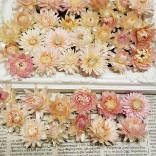 薄いピンクのヘリクリサム帝王貝細工62ウエディング花冠ヘッドドレス(ドライフラワー)