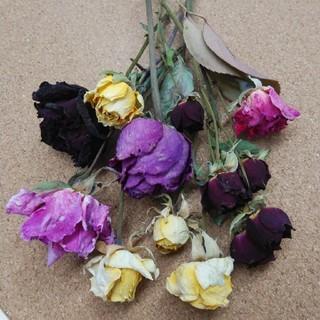 花材67 ドライフラワー 色とりどりバラセット アロマワックス リース などに (ドライフラワー)