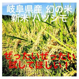 収穫したて!2018年新米 ハツシモ玄米10キロ