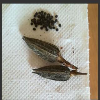 エディブルフラワー 花オクラ種 花を食べるオクラ 1鞘から(野菜)
