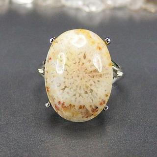菊花石コーラル化石指輪リングAAA天然石一点物14号石街U0061(リング(指輪))