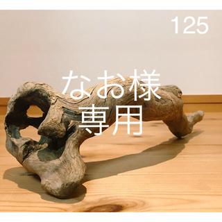 流木【125.81】(爬虫類/両生類用品)