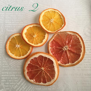 citrus  Q  ドライフルーツ(ドライフラワー)