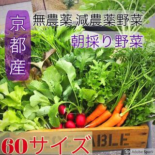 新鮮野菜詰め合わせ!今が旬!!京野菜 無農薬 減農薬 朝採り発送です^ ^