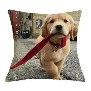 ゴールデンレトリバー クッションカバー♪ 新品未使用品 送料無料♪(004)(犬)