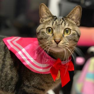 犬★猫 セーラー服(猫)