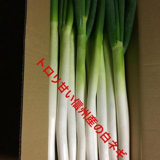 白ネギ5キロ専用の箱詰めで送ります。(野菜)