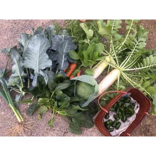 野菜詰め合わせ 自家栽培 80サイズ