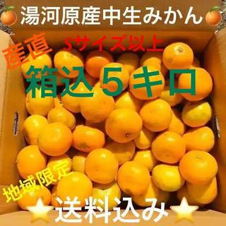 訳あり★産直不揃い5kg箱込み★神奈川県湯河原産🍊中生みかん🍊⑤