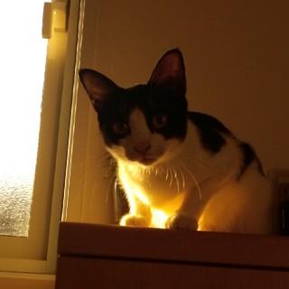 猫の写真(写真)