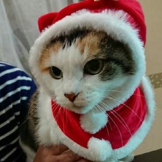 ねこのかぶりもの クリスマス ポンチョ
