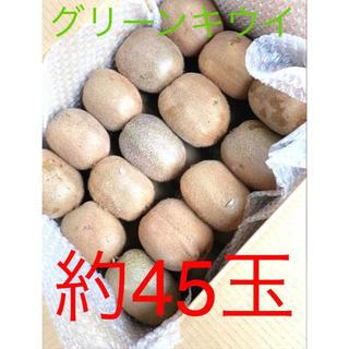 千葉県船橋産 グリーンキウイ 約45玉 約6.5kg(フルーツ)