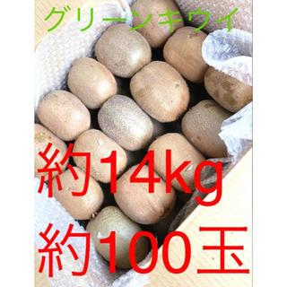 千葉県船橋産 グリーンキウイ 約14kg 約100玉(フルーツ)
