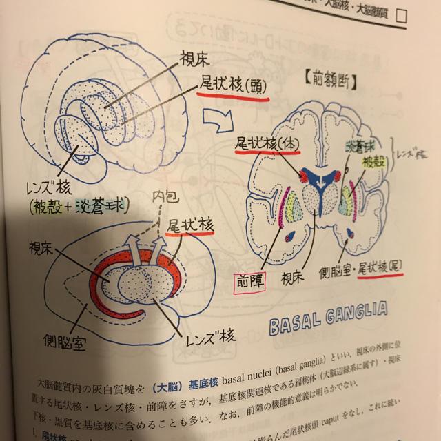 イラスト解剖学 第8版の通販 By ゆっこs Shopラクマ
