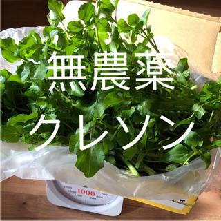 クレソン 無農薬 野菜(野菜)