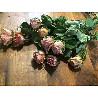 バラ ドライフラワー  花材  ピンクベージュ(ドライフラワー)