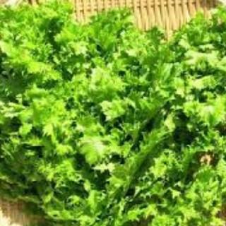 無農薬栽培わさびな500g(野菜)