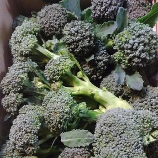 無農薬ブロッコリーわき芽500g(野菜)