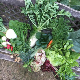 無農薬野菜ちょっとずつ 少量多品種 fickle beat (野菜)