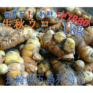 無農薬❗新鮮❗【生秋ウコン1㎏。】 長崎県五島列島よりお届け❗(野菜)