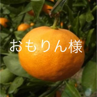 瀬戸田ミカン  2.5キロ
