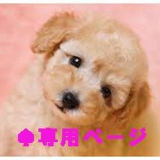 princess52様専用ページ ヒョウ柄Mとユニオンベストワイン色M(犬)