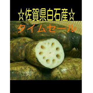 ☆佐賀県白石産れんこん☆(野菜)