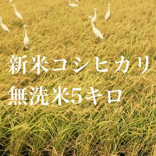コシヒカリ無洗米5キロ(米/穀物)