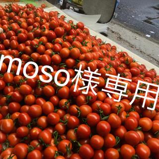 moso様専用 ミニトマト2kg(野菜)