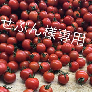 せぶん様専用 ミニトマト1kg(野菜)