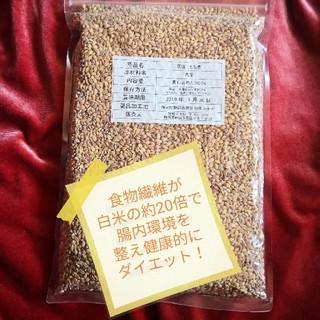 国産もち麦 真空500gパック(米/穀物)