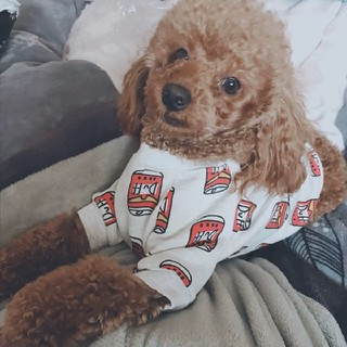 缶柄 トレーナー 犬 わんちゃん 冬用 厚手の服 ドッグウェア(犬)