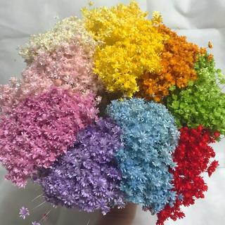 スターフラワーミニ 花材 アソート10色(プリザーブドフラワー)