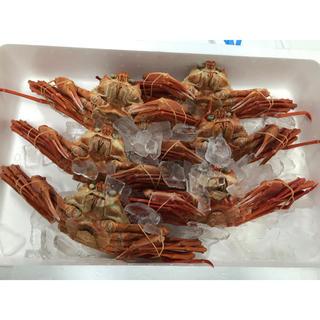 北海道産 紅ズワイ蟹姿3kgセット 5〜7尾(魚介)