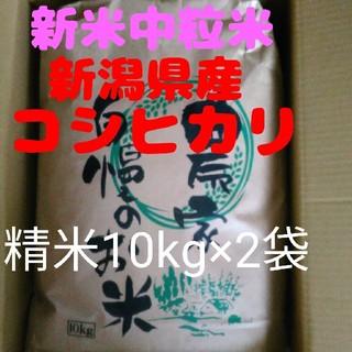 【即購入OK】新米新潟コシヒカリ中粒米10キロ精米×2袋同梱